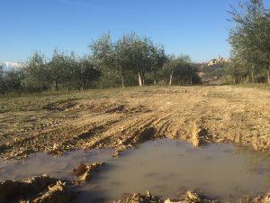Lo sterrato con le sue pozzanghere ci separa dal borgo di Altidona sullo sfondo