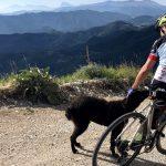 Cani. I migliori nemici dei ciclisti?