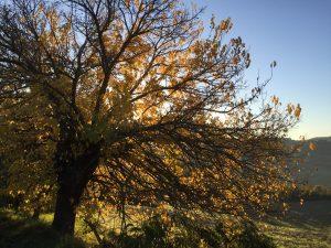 colori di autunno