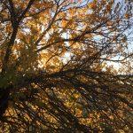 Autunno, la stagione dei colori più belli