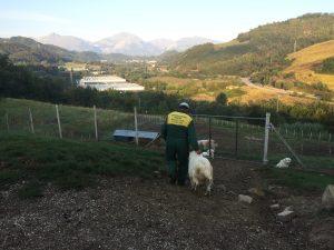 Domenico torna al lavoro con i suoi cani
