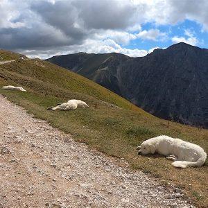 strada-Fargno-cani-che-dormono