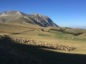 pecore sui sibillini