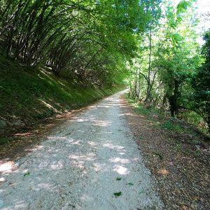 strada-bosco-Terro